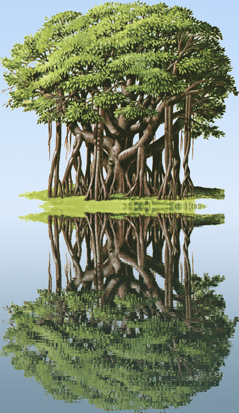 banyan-tree water reflection
